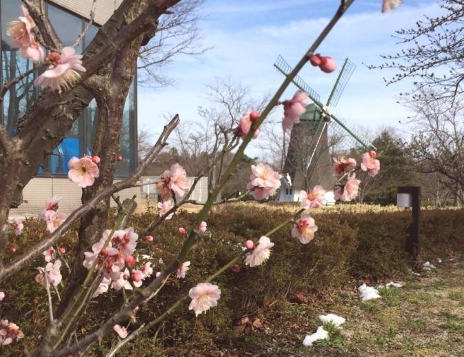 梅の花と風車